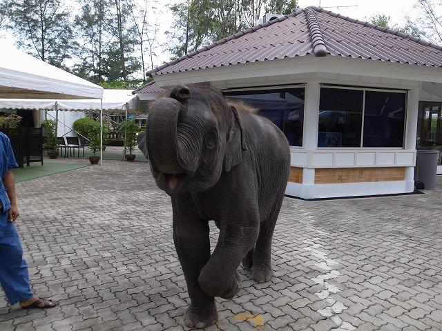 ラグーナリゾート探検中、象と記念写真