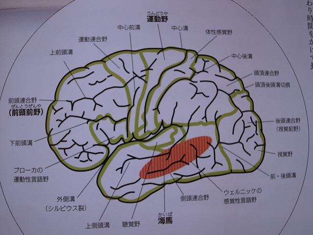 走ること=考えること 脳細胞を増やそう!