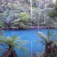 ここは、ジェノラン・ケーブルス入り口付近にある湖です。 なんとご覧の通りの美しいブルー!その名もブルーレイクです。 ここにはカモノハシも住んでいるんですよ。 カモノハシってご存知ですか?オーストラリアに生息してる奇妙な哺 […]
